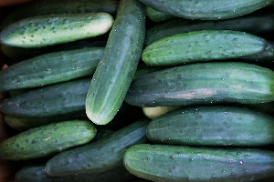 Organic cucumbers from Ripley Farm, Maine