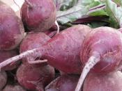 Beets from Ripley Farm's organic CSA farm share Dover-Foxcroft Maine