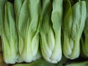 pac choi bok choy organic vegetables dover foxcroft Maine