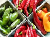 Hot peppers for Ripley Farm's organic vegetable CSA in Dover Foxcroft Maine