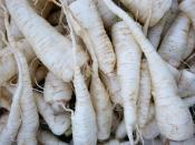 parsley root for ripley farm's organic CSA in dover-foxcroft Maine