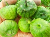 organic tomatillos for ripley farm's CSA in dover foxcroft maine