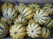 Sweet Dumpling Winter Squashes
